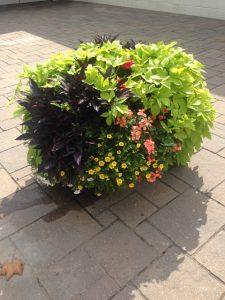 Landscaping Maintenance